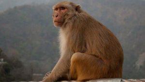 majmok-3-300x169 Értelem lecsendesítése